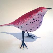 Purple Breasted Warbler